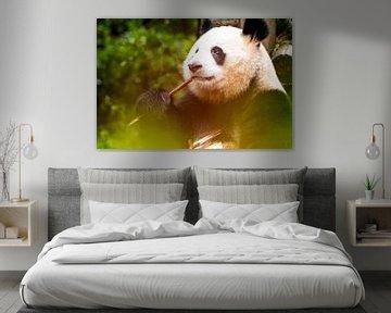 Panda aan het eten