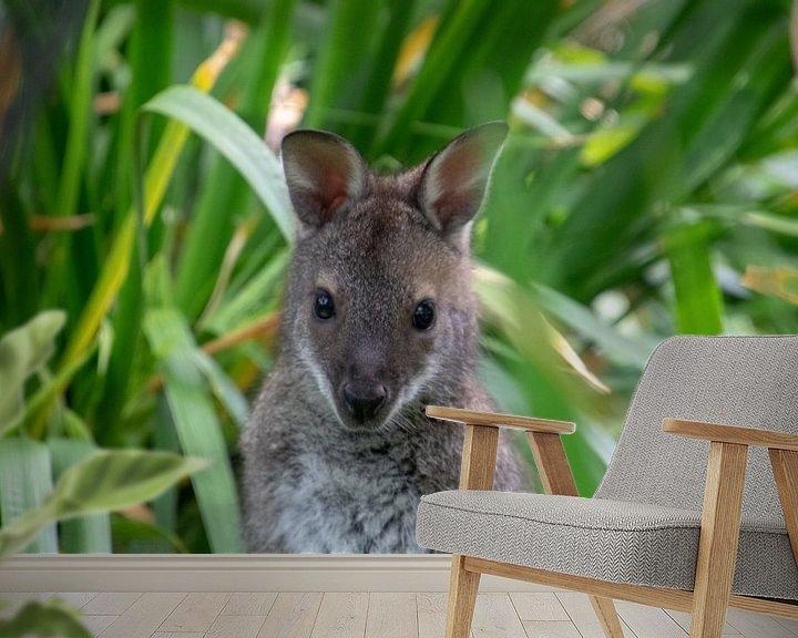 Beispiel fototapete: Känguru mit Aufmerksamkeit von Artoon Projects