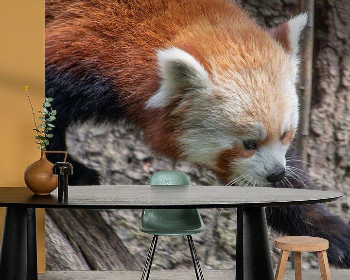 Beispiel fototapete: Laufender kleiner Panda von Artoon Projects