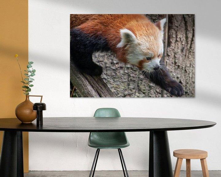 Beispiel: Laufender kleiner Panda von Artoon Projects