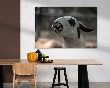 Verrückter Lama-Schnabel von Artoon Projects