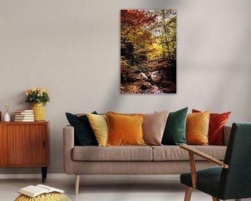 Rivier in het herfst bos van Mickéle Godderis