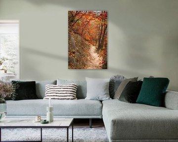 Weg tussen de bomen en rotsen van Mickéle Godderis