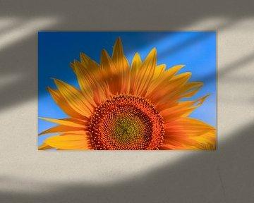 Sonnenblume von Thomas Jäger