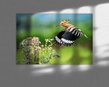 Fliegender Hopfen (Upupa epops) in Italien. von Beschermingswerk voor aan uw muur