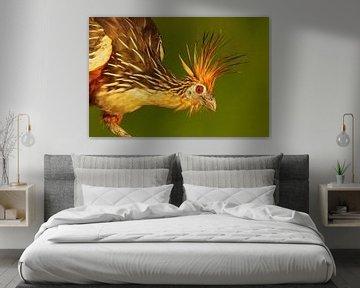 Hoatzin (Opisthocomus hoazin) portret van Beschermingswerk voor aan uw muur