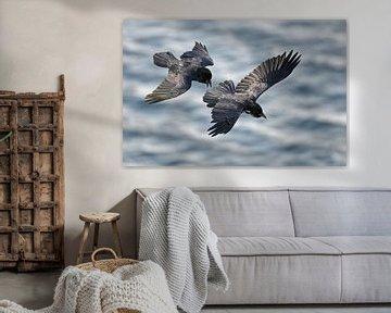 Twee Raven in vlucht van Beschermingswerk voor aan uw muur