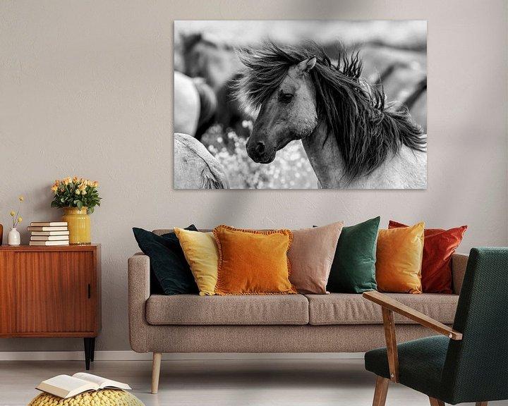Beispiel: Schwarz-Weiß-Aufnahme eines Konik-Pferdes von AGAMI Photo Agency