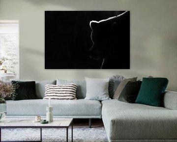 Schwarz-Weiß-Aufnahme eines Grizzlybären (Ursus arctos) von AGAMI Photo Agency
