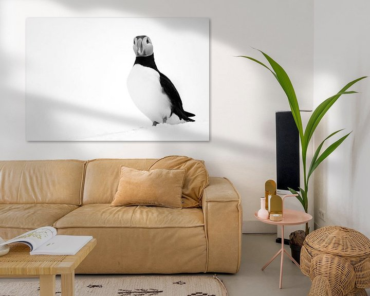 Beispiel: Schwarz-Weiß-Aufnahme eines Papageientauchers von AGAMI Photo Agency