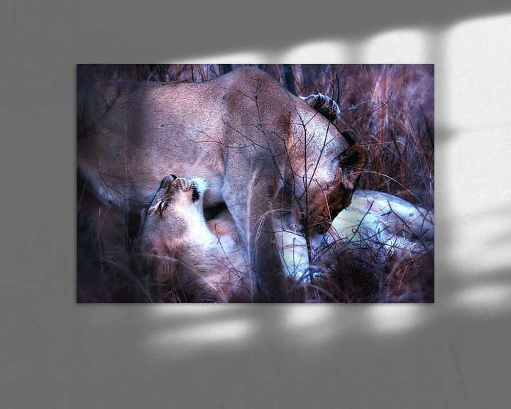 Beispiel: Kuschelnde Löwinnen von Aad Clemens