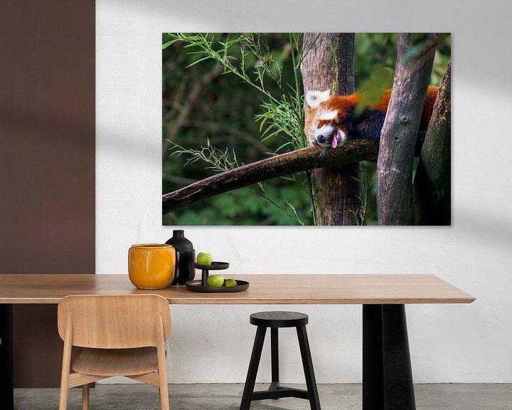 Beispiel: Kleiner Panda im Wald von Deimel Fotografie