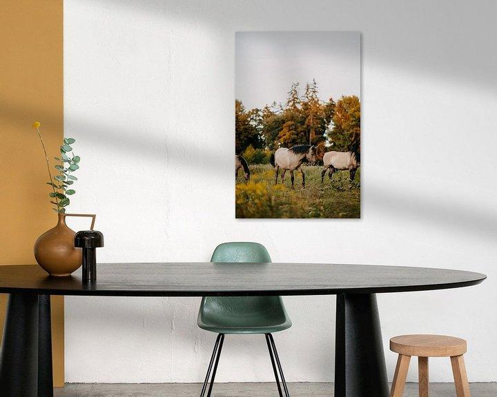 Beispiel: Konik-Pferd im Naturschutzgebiet bei Sonnenuntergang | Fotodruck | von Yvette Baur