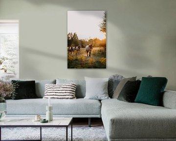 Herde Konik-Pferde im Naturschutzgebiet bei Sonnenuntergang | drucken | von Yvette Baur