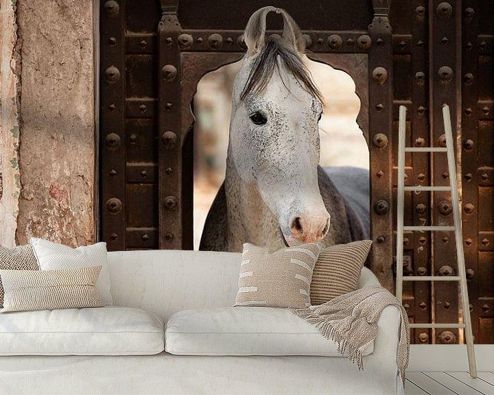 Beispiel fototapete: Marwari-Pferd in einem Haveli in Indien | Reisefotografie von Lotte van Alderen