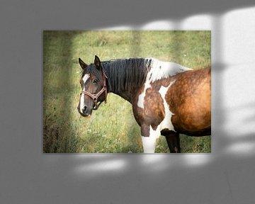Geschecktes Pferd auf der Wiese von Kashja Neels