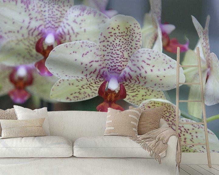 Sfeerimpressie behang: Orchide van Paul Hinskens