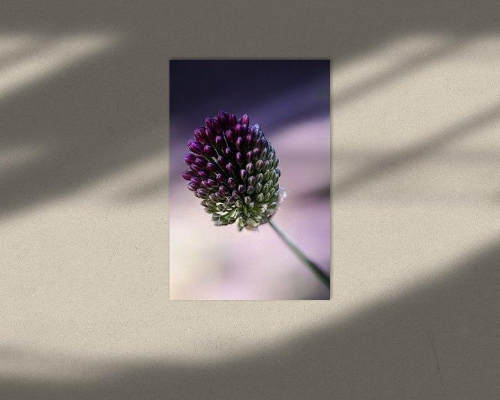 Sfeerimpressie: Allium bloem van Lily Ploeg