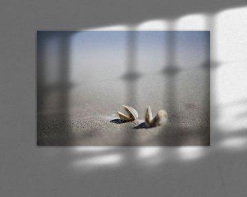 zandstorm en schelpen op schiermonnikoog van Karijn | Fine art Natuur en Reis Fotografie