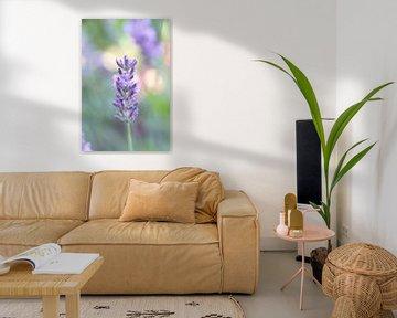 Nahaufnahme von Lavendel mit Bokeh-Hintergrund von Ad Jekel