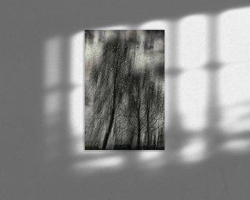 Birken im Sturm von Christine Nöhmeier