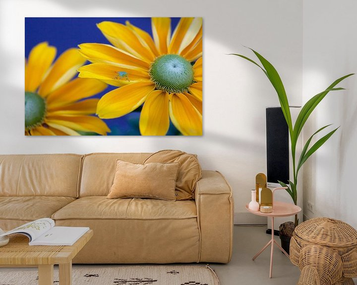 Sfeerimpressie: Who's afraid of Blue, Yellow and Green van Nanouk el Gamal - Wijchers (Photonook)