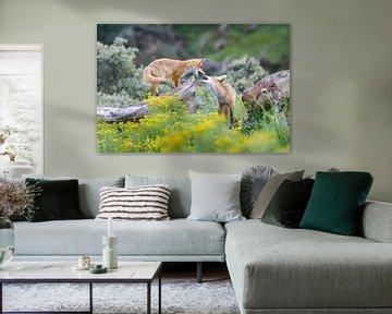 Rotfüchse von Pim Leijen