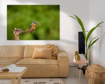Eisvogel mit Fisch von Tanja van Beuningen