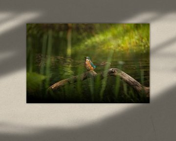 Eisvogel in der Natur von Tanja van Beuningen