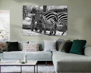 Zebra von Willemke de Bruin