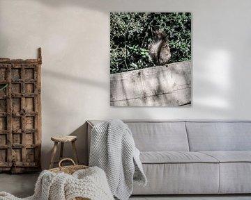 Ein Eichhörnchen sitzt im Garten von MirjamCornelissen - Fotografie