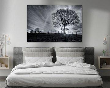 schwarz und weiß vom Baum in der Dämmerung von Ronenvief