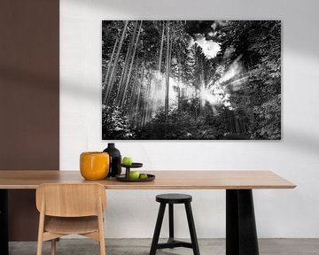 Sonnenstrahlen im Wald von MindScape Photography
