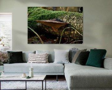 Grote paddenstoel tegen omgevallen boom van Koen van de Laar