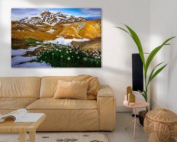Kleurrijke bergen in Kerlingarfjöll  Ijsland met sneeuwklokjes op de voorgrond van Kevin Pluk
