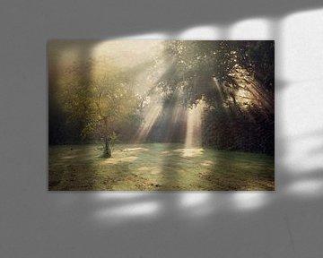zonovergoten... van Els Fonteine