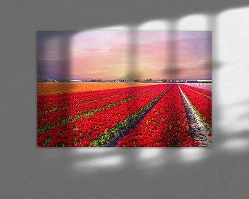 Blühende Tulpenfelder bei Sonnenuntergang in der Nähe von Lisse von Nisangha Masselink