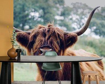 Portret van Krachtige Schotse Hooglander van Emma Van Leur