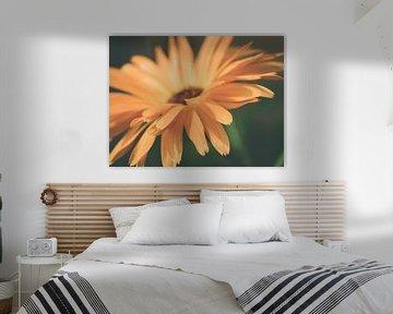 Orangenblüte in dunkler Umgebung Nahaufnahme Makro von Art By Dominic
