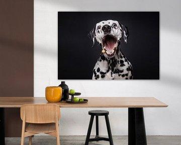 Lustiger dalmatinischer Hund fängt ein leckeres Bonbon von Lotte van Alderen