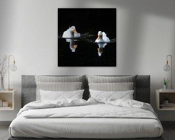 Enten abwechselnd spiegeln von Henk Zielstra