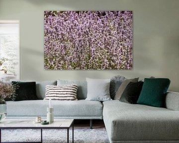 Ein Feld voller Lavendel von Elise van der Bruggen