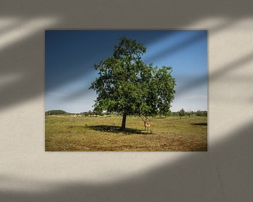 daim sous un arbre