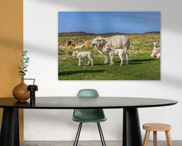 Schafe im Naturschutzgebiet Ellenbogen, Sylt von Christian Müringer