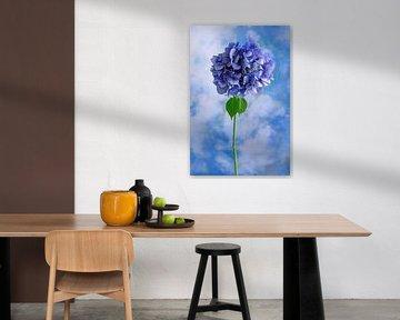 Blaue Blume symbolisiert: Unschuld von Clazien Boot