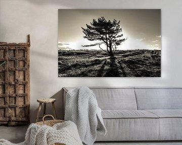The lonely tree - part II van Mark Eckhardt