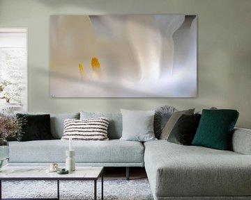 Wit en geel van Klaas Bonda