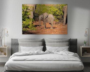 Elefantenjugend im Etoscha-Nationalpark von GoWildGoNaturepictures