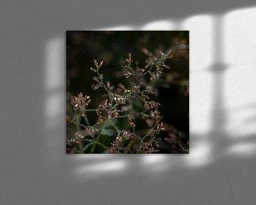 Shimmer von Stefanie van Dijk