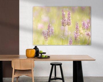 Blühender Lavendel von Roosmarijn Bruijns